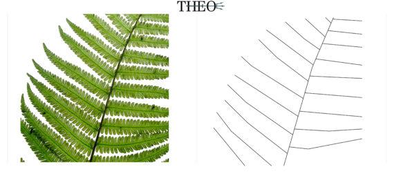 schematized fern