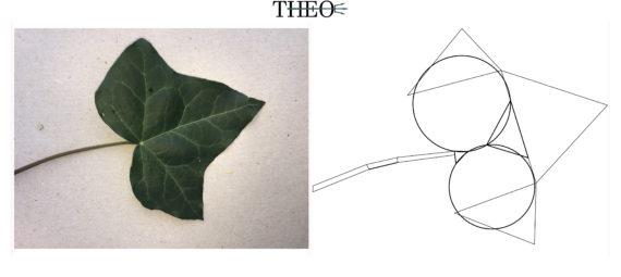 basic form Ivy Leaf
