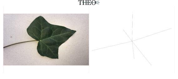 schematized Ivy Leaf