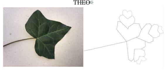 texture Ivy Leaf