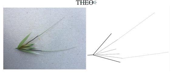 schematized Forasacco