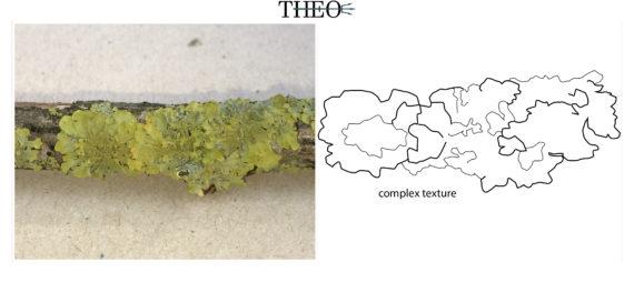 texture Lichens