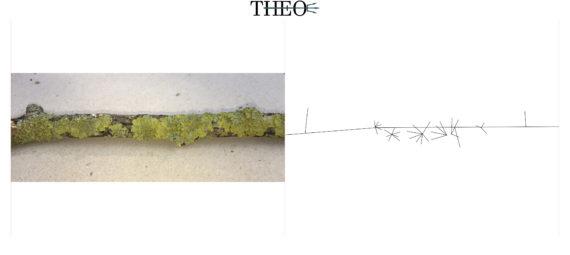 schematized Lichens