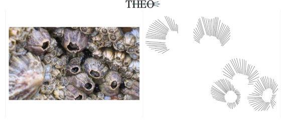 texture barnacle