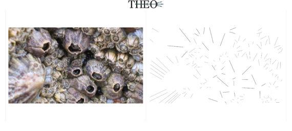 barnacle schematization