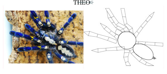 Basic form Spider
