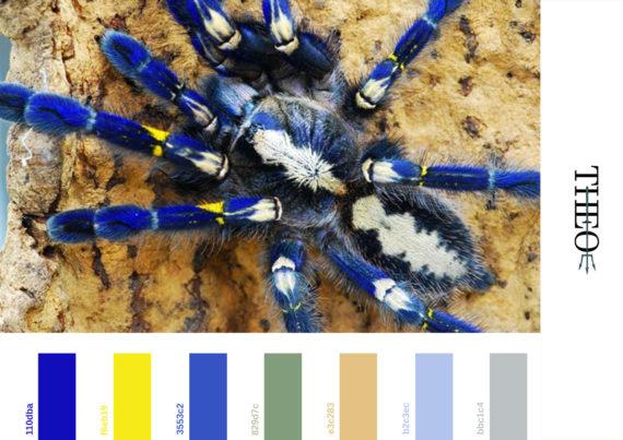 Pantone Spider